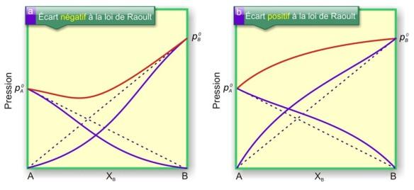 Écarts à la loi de Raoult pour des solutions réelles. a) écart négatif : les interactions inter moléculaires sont supérieures aux interactions intramoléculaires. b) Écart positif : les interactions intramoléculaires sont supérieures aux interactions intermoléculaires.